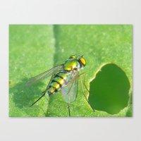 Bug On A Leaf Canvas Print