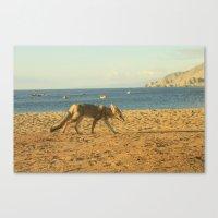 Fox On The Beach Canvas Print