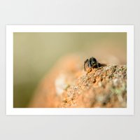 Spider Contemplating The… Art Print