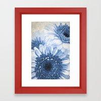 Blue Gerbera  Framed Art Print