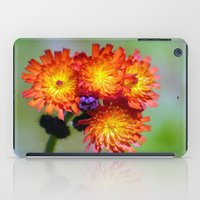 Orange Hawkweed iPad Case