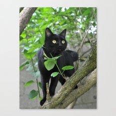 Black Cat in Tree Canvas Print