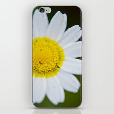 Miss Daisy iPhone & iPod Skin