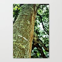 Canvas Print featuring Lookingup by Lindsey