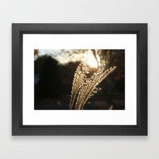 Grasses in the Sun Framed Art Print