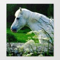 The White Pony Canvas Print