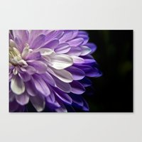 Burst Of Purple  Canvas Print
