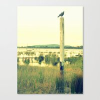 Magpie watching Canvas Print