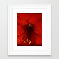I think you get the point-settia Framed Art Print