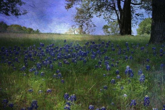 A field of Blue Art Print