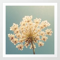 Queen Anne's Lace Art Print