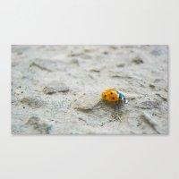 Ladybird Canvas Print