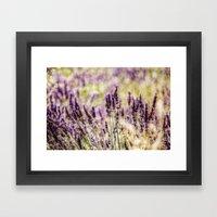 Smell The Lavender Framed Art Print