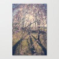 Sun Coming Through Canvas Print