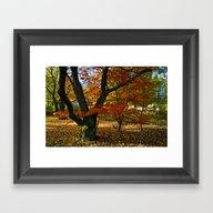 Red Autumnal Leaves Framed Art Print