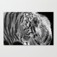 Tiger Cub 2 Canvas Print