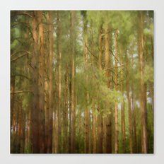 July forest Canvas Print
