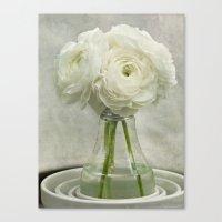 White On White Ranunculu… Canvas Print