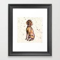 Hungarian Vizsla Dog Pup… Framed Art Print