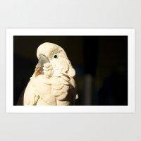 Bird Shadow# 2 Art Print