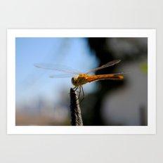 Libélula | Dragonfly Art Print