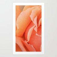 Painted Rose Petal Art Print