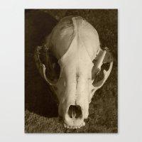 Raccoon Skull 2006 II Canvas Print
