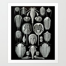 Trilobites and Fossils by Ernst Haeckel Art Print