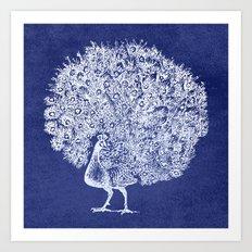 Night Peacock Art Print
