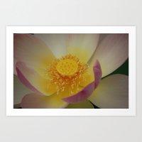 Lotus Blossom Flower 31 Art Print