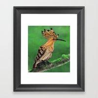 Upupa Framed Art Print