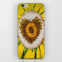 Sunflower Of Love iPhone & iPod Skin