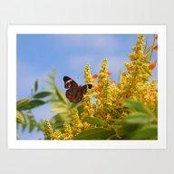 Butterfly Song Art Print