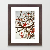 Springtime Bloom - Flame of the Forest Framed Art Print