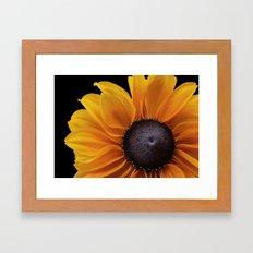 Rudbeckia Flower Framed Art Print