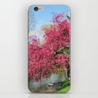 Spring Crabapple Blooms iPhone & iPod Skin