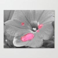 Drops of Pink Canvas Print