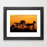 Sunset Trees Framed Art Print