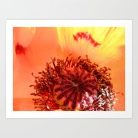 Poppy Love Art Print
