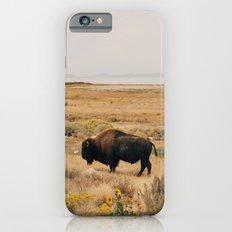Bison Bull on Antelope Island iPhone 6 Slim Case