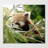 It's A Firefox ? Canvas Print
