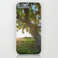 Morning In Danville iPhone 6 Slim Case