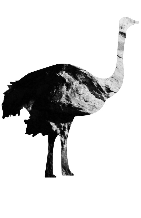Ostrich (The Living Things Series) Art Print