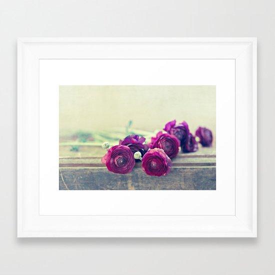 Like Royalty (Purple Ranunculus)  Framed Art Print