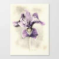 Opal Iris Canvas Print