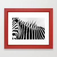 Zebra Stripes & Back Framed Art Print
