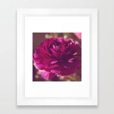 Crimson Rose Framed Art Print