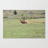 Rolling Horse Canvas Print