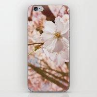 To Bear Fruit iPhone & iPod Skin