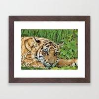 The Tiger!! Framed Art Print